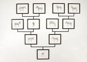 Julie Comnick Art - Untitled (zebra genealogy tree